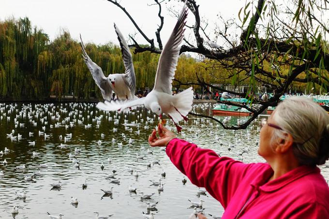 the-green-lake-seagulls-breeding-kunming