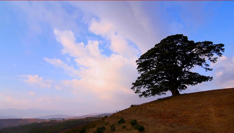 L'ancien arbre de Dragon à la Terre Rouge de Dongchuan, Kunming