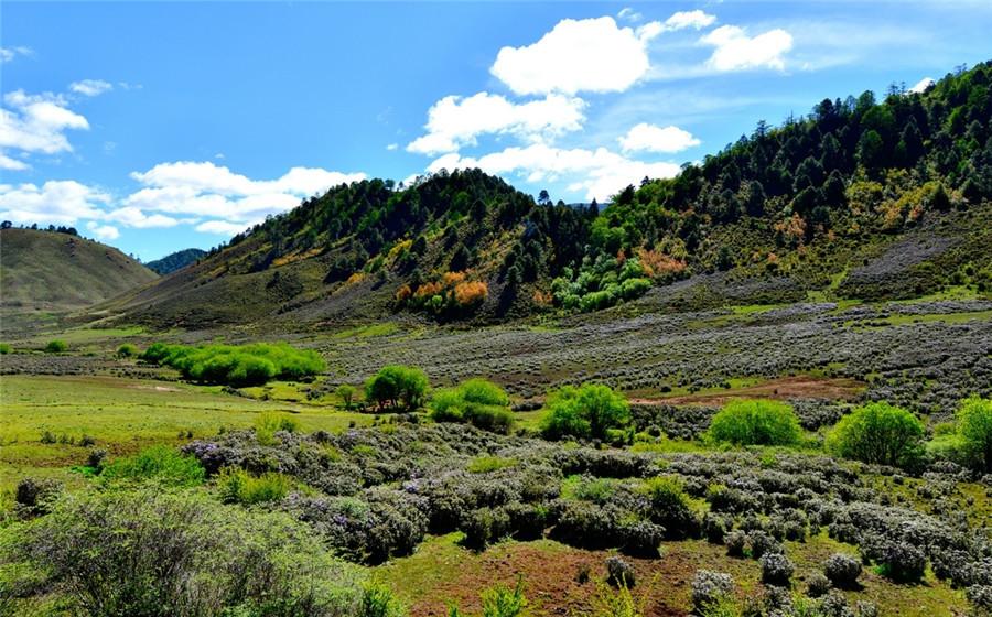 La Vallée de Luoguqing au comté de Luopin, Nujiang